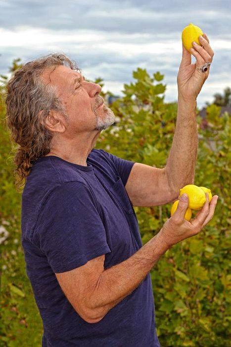 Lone's place-robert-plant-lemons.jpg