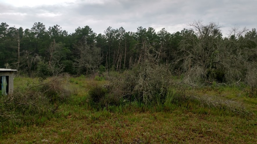 Forestry Mulching Before and After-sandhills.jpg