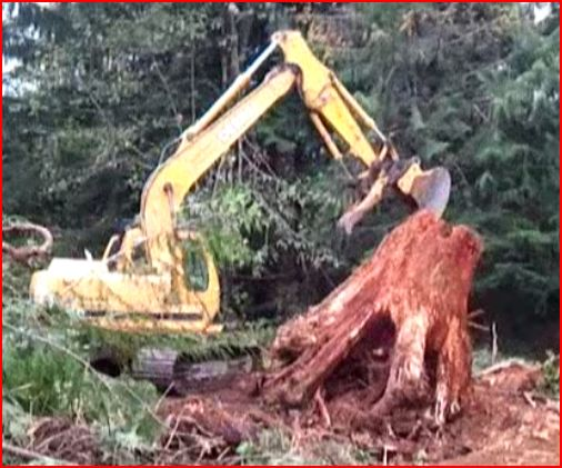 Removing some stumps-sre-2.jpg