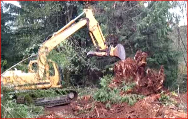 Removing some stumps-sre-3.jpg