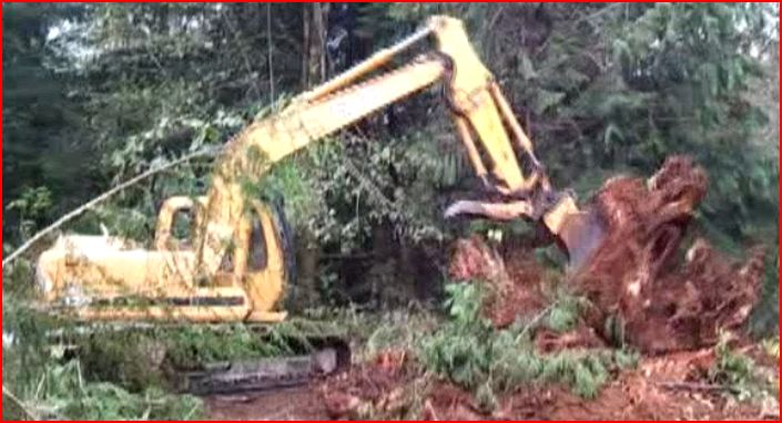 Removing some stumps-sre-4.jpg