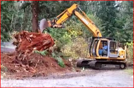 Removing some stumps-sre-9.jpg