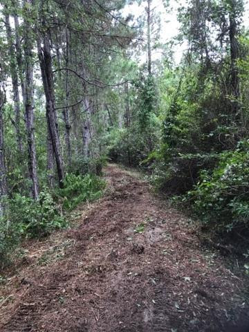 Forestry Mulching Before and After-trail-clearing-equipment.jpeg