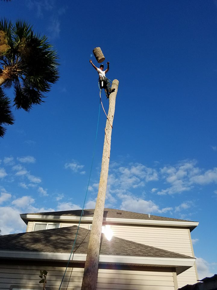 New! Member pictures thread,-tree-trimming-volusia-county-daytona-beach.jpg
