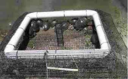 turtle trap plans