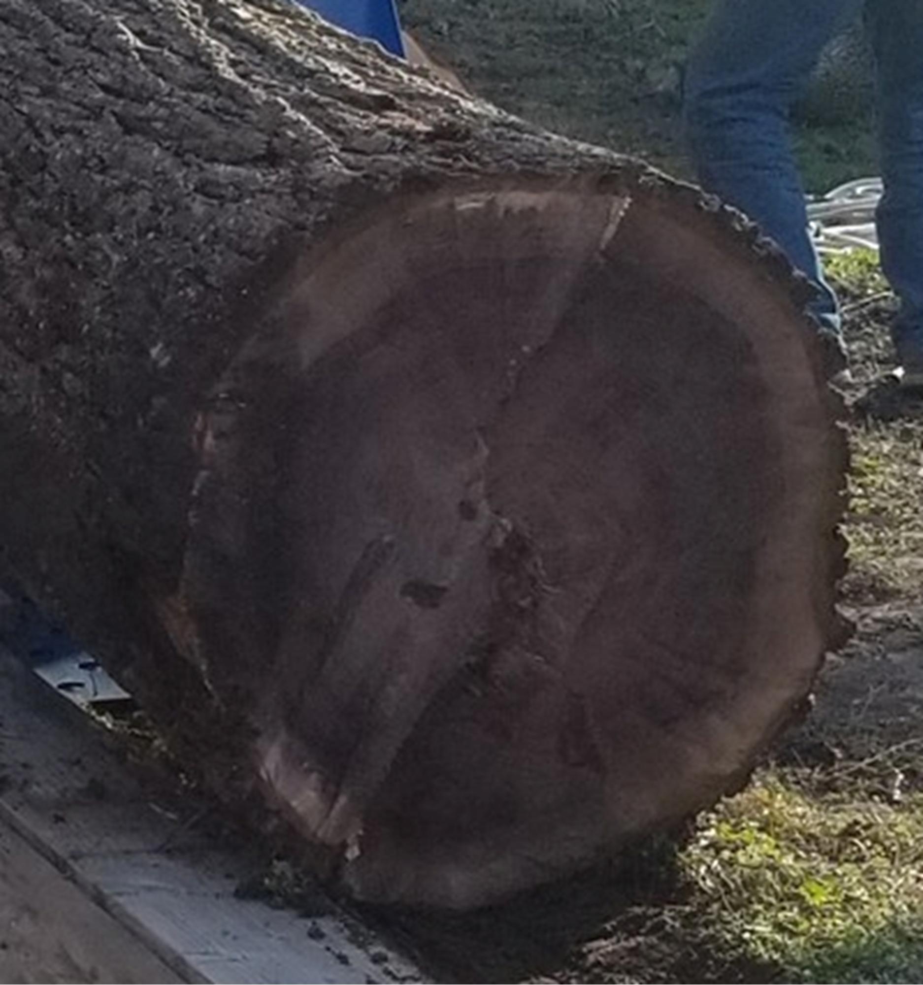 More firewood....-walnut4.jpg