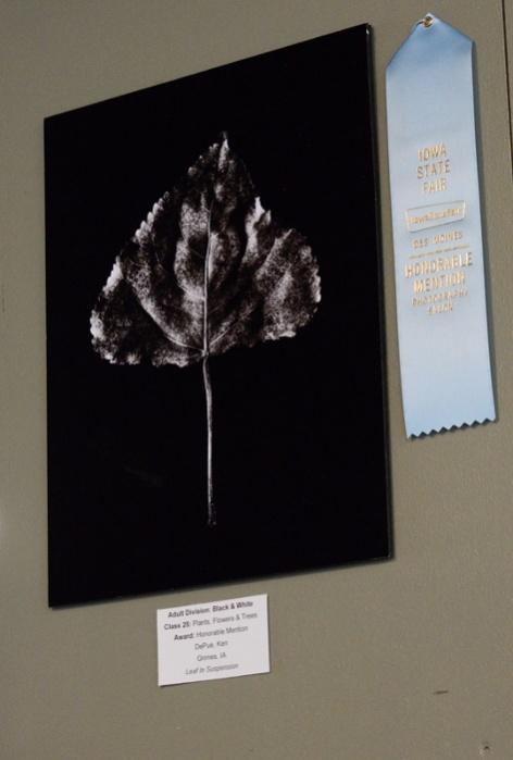 19529-floating-leaf.jpg