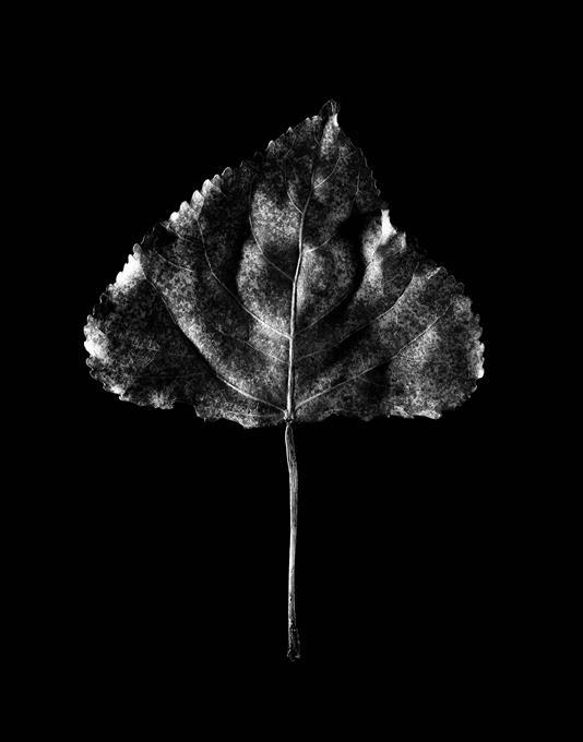 19561-post-leaf-suspension-8575-copy.jpg
